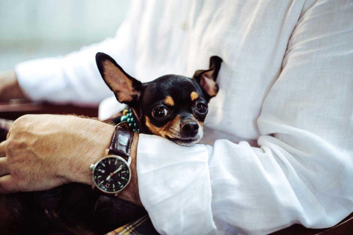 Zoonozele - Boli pe care le pot transmite animalele de companie